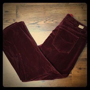 Gloria Vanderbilt Velvet Jeans